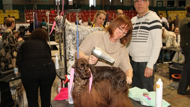 Expo canine 2016